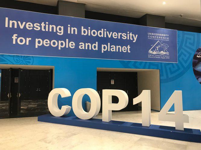 Principais decisões da COP14 de biodiversidade e os passos até 2020