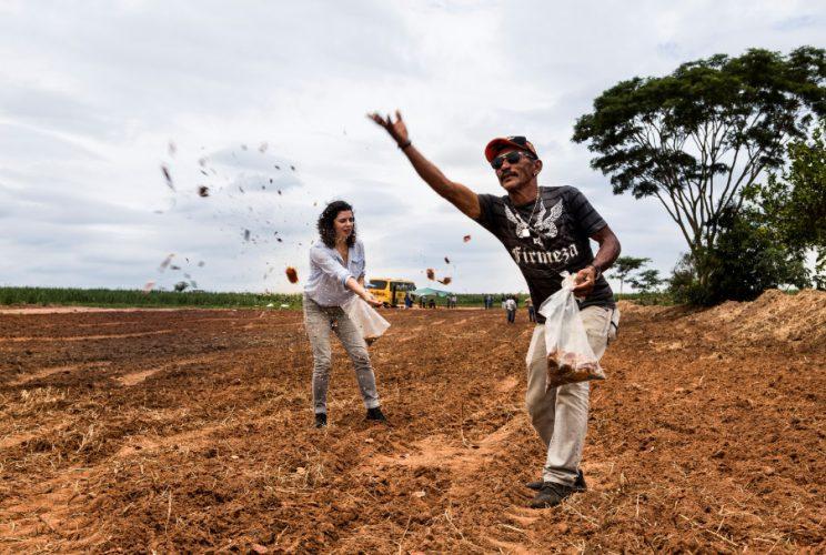 Presença digital: Informativo e redes sociais para disseminar ações de restauração da Iniciativa Caminhos da Semente