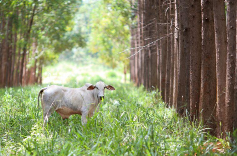 Política agrícola prioriza o crédito para investimento