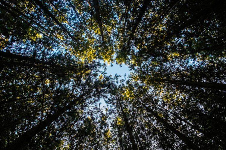 Agroicone contribui para Força Tarefa de Finanças Verdes na Coalizão Brasil Clima, Florestas e Agricultura