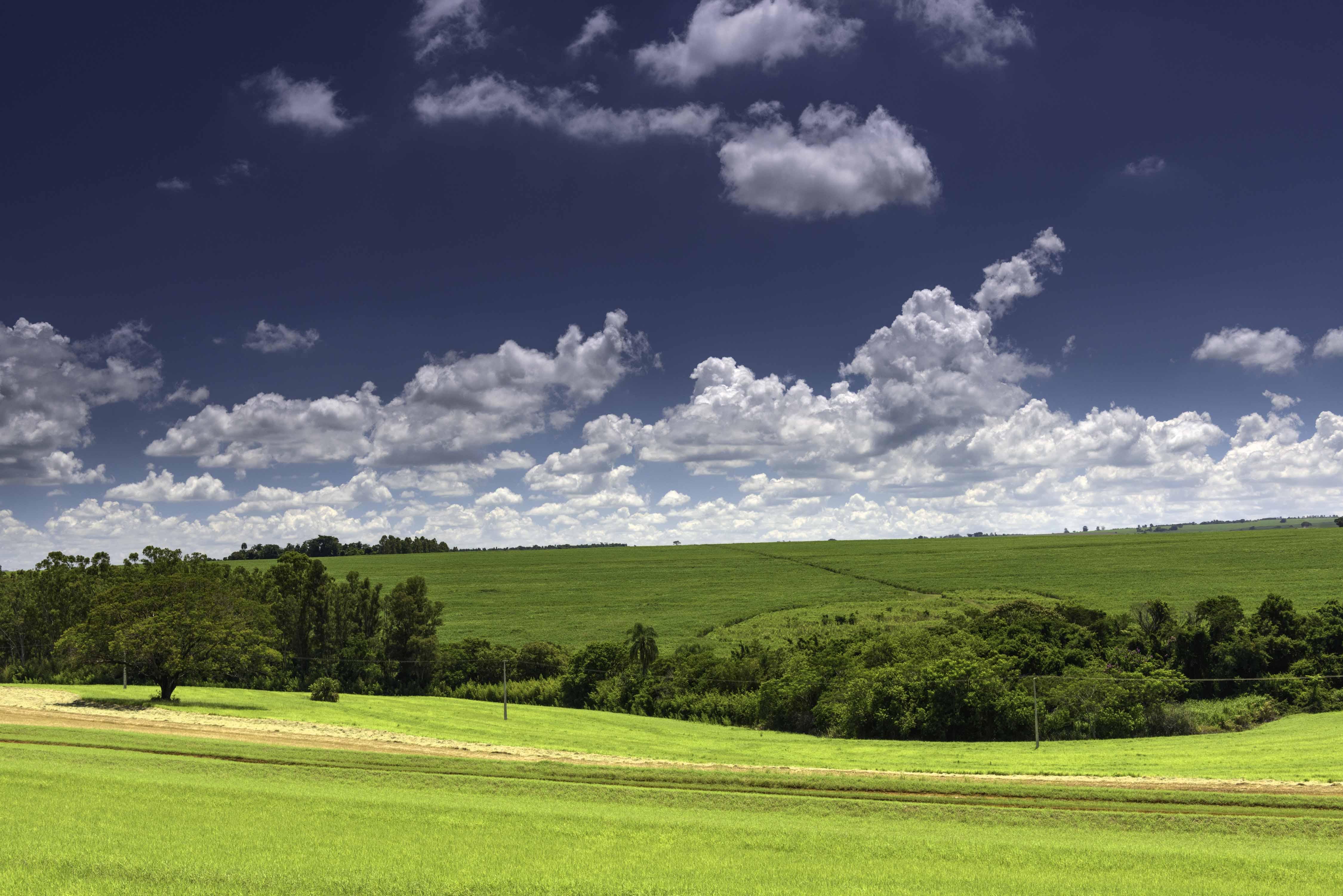 INPUT (Iniciativa para o Uso da Terra): Agroicone atua pela implementação do novo Código Florestal brasileiro