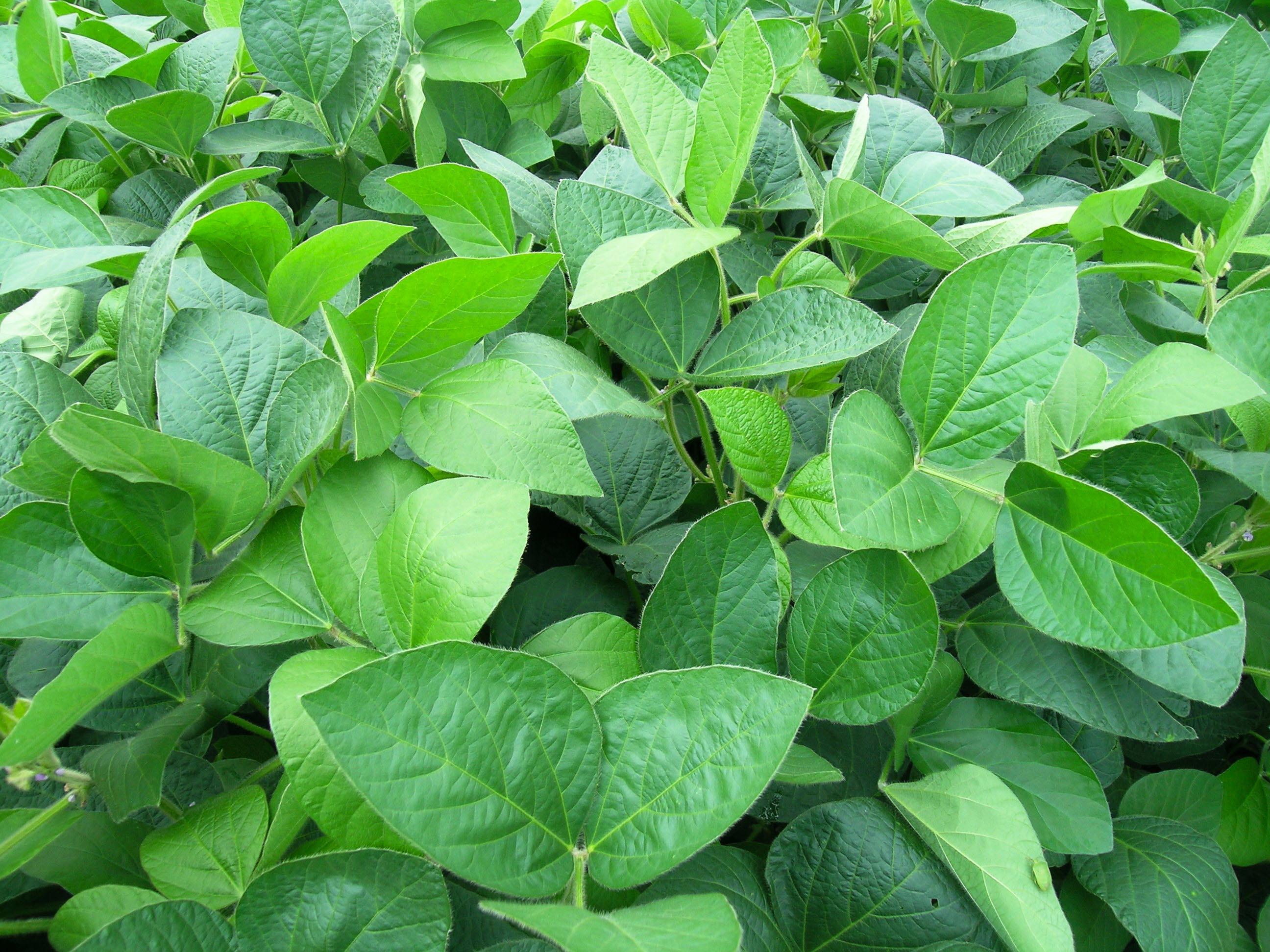 Agroicone, Abiove, Aprosoja-MT e TNC-Brasil iniciam módulo ambiental do Soja Plus no maior estado produtor de soja