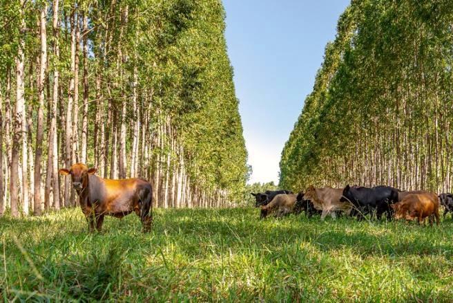 Oportunidades para expandir soja, pecuária, agricultura familiar e florestas comerciais no Cerrado em pastagens degradadas