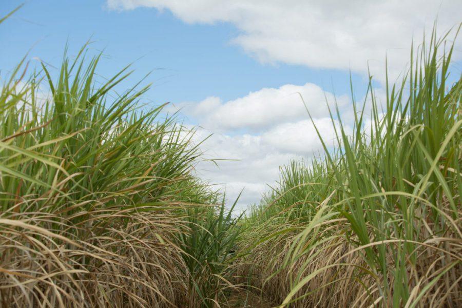 Agroicone apoia usinas de biocombustíveis em processos internacionais de certificação