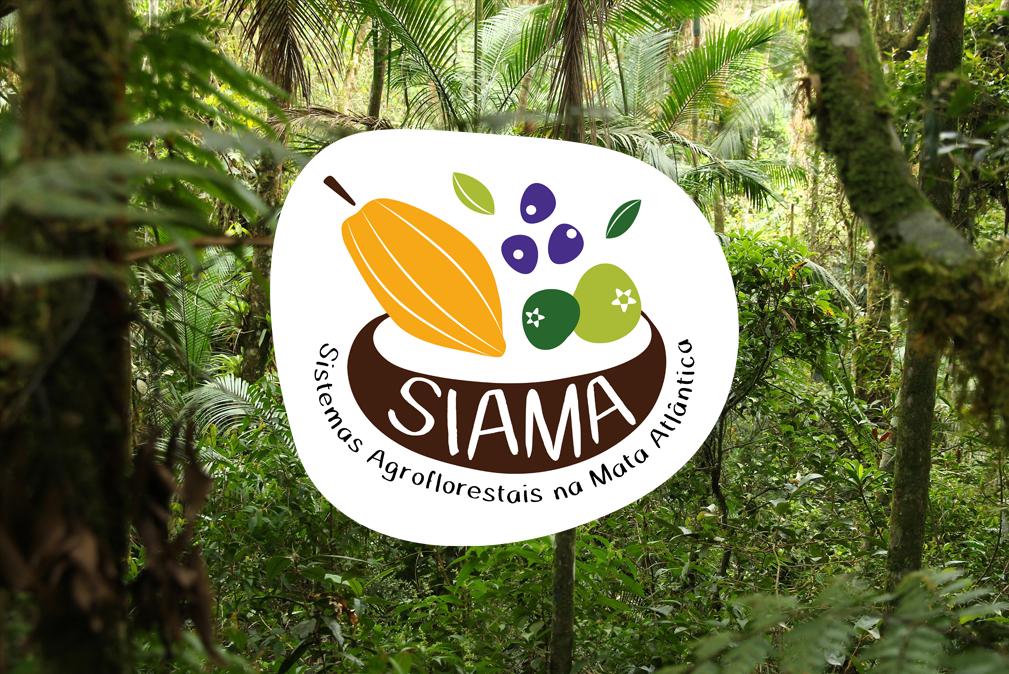 Projeto apoia agrofloresta como estratégia de desenvolvimento em regiões da Mata Atlântica
